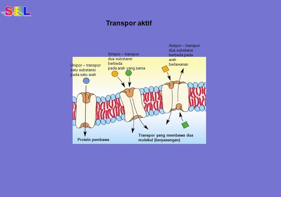 SEL Transpor aktif Antipor – transpor dua substansi berbeda pada arah