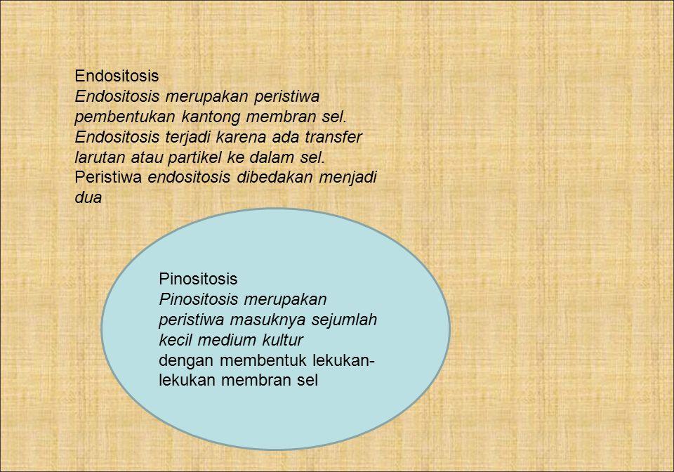 Endositosis Endositosis merupakan peristiwa pembentukan kantong membran sel.