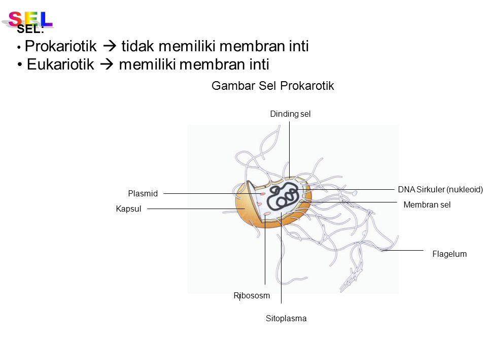 Eukariotik  memiliki membran inti