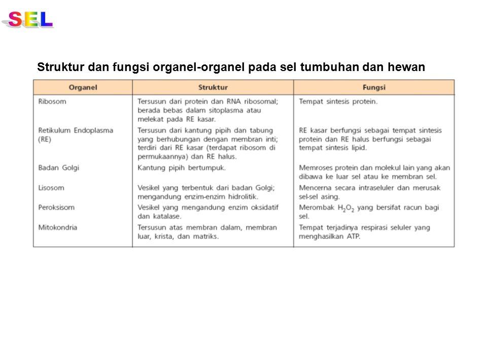 SEL Struktur dan fungsi organel-organel pada sel tumbuhan dan hewan