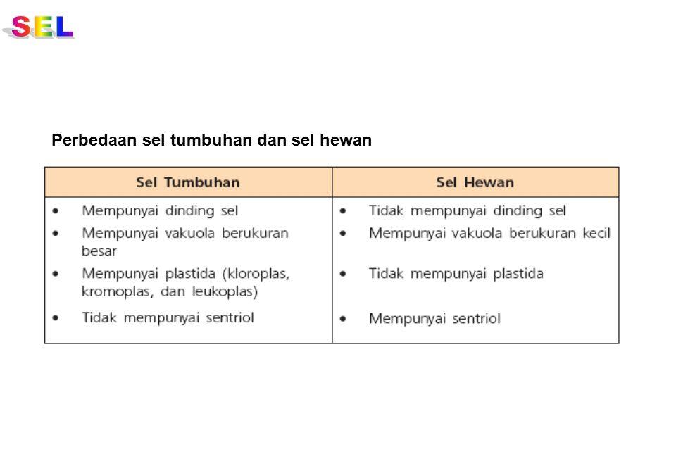 SEL Perbedaan sel tumbuhan dan sel hewan