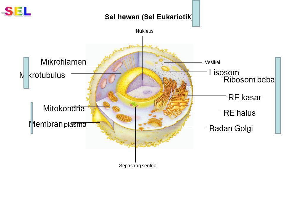 SEL Mikrofilamen Lisosom Mikrotubulus Ribosom bebas RE kasar