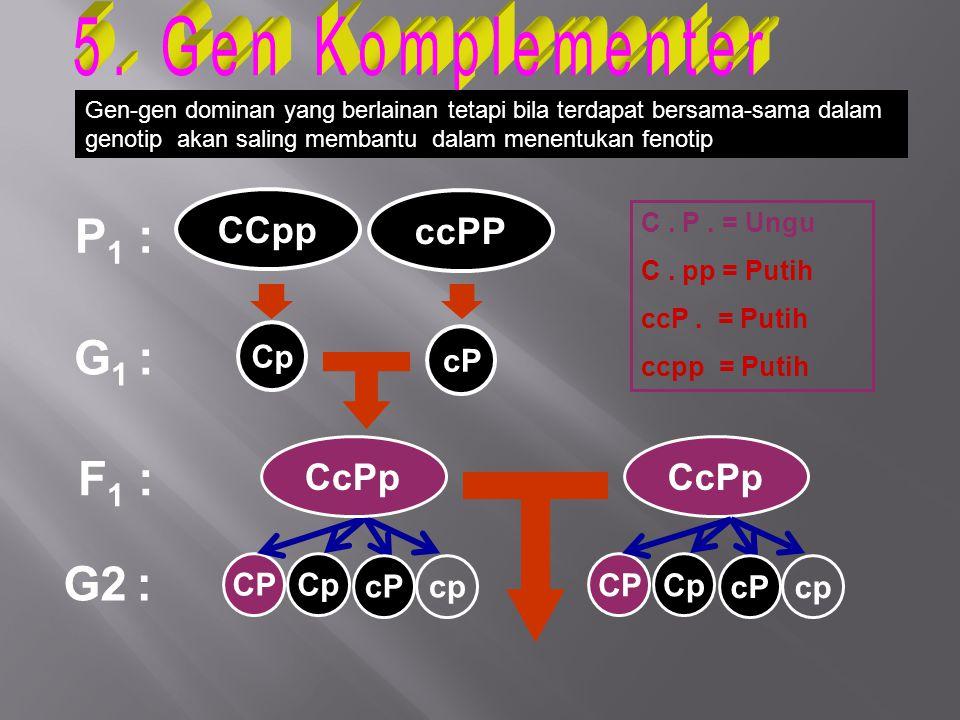 5. Gen Komplementer P1 : G1 : F1 : G2 : CCpp ccPP CcPp CcPp Cp cP CP