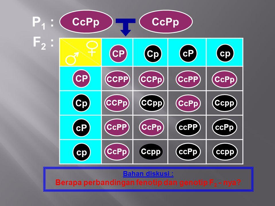 Berapa perbandingan fenotip dan genotip F2 - nya