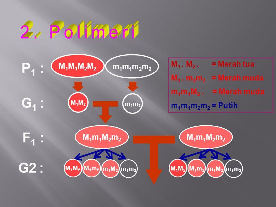 2. Polimeri P1 : G1 : F1 : G2 : M1M1M2M2 m1m1m2m2
