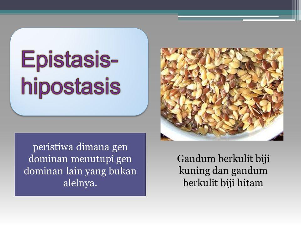 Epistasis-hipostasis