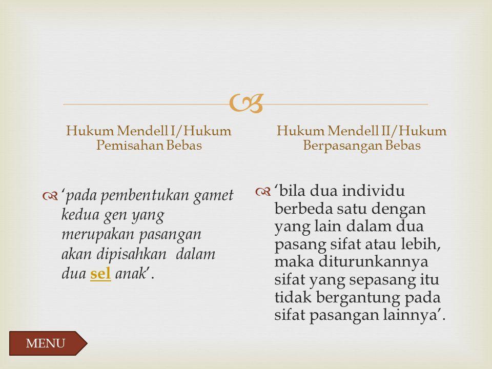 Hukum Mendell I/Hukum Pemisahan Bebas