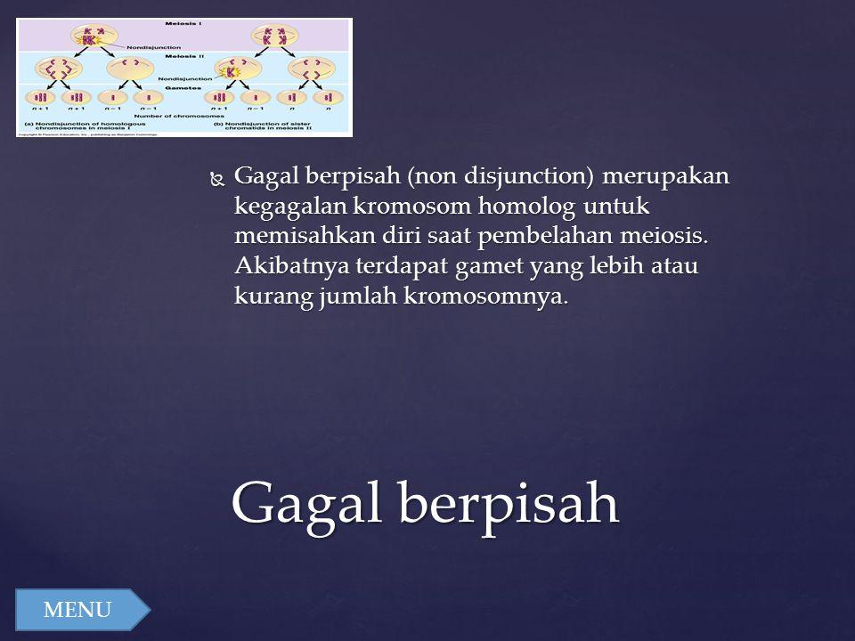 Gagal berpisah (non disjunction) merupakan kegagalan kromosom homolog untuk memisahkan diri saat pembelahan meiosis. Akibatnya terdapat gamet yang lebih atau kurang jumlah kromosomnya.