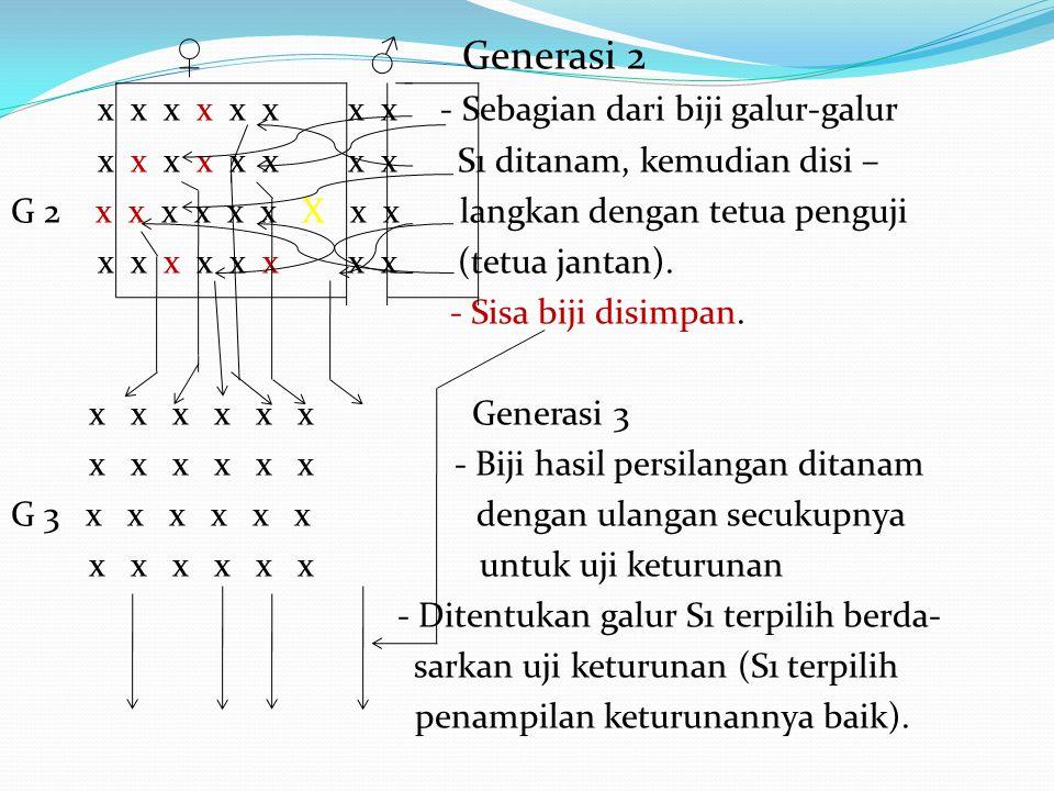 ♀ ♂ Generasi 2 x x x x x x x x - Sebagian dari biji galur-galur