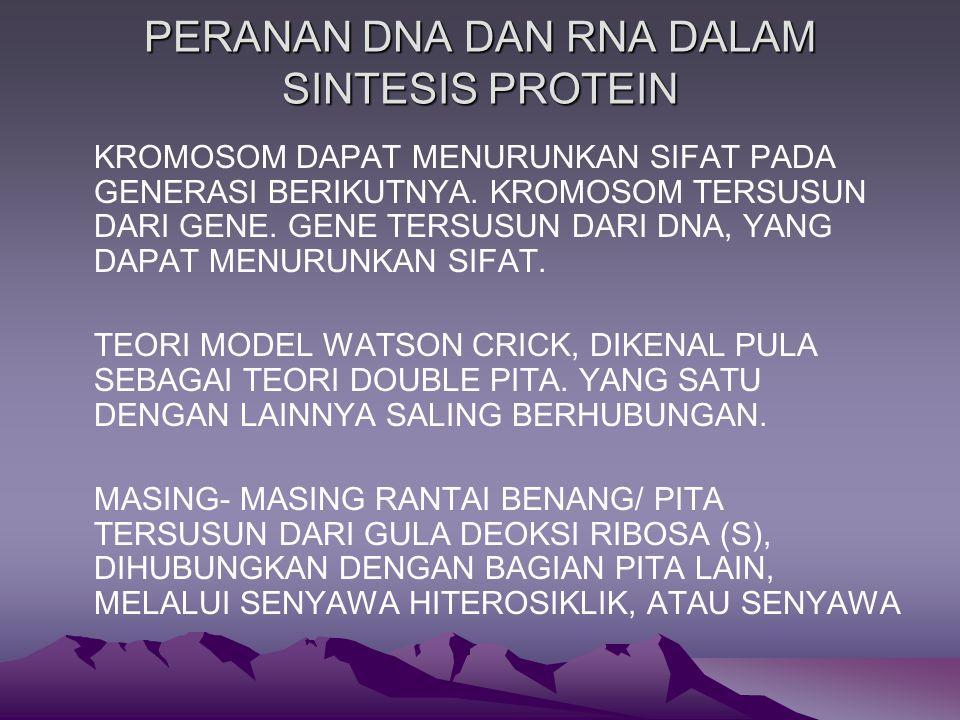 PERANAN DNA DAN RNA DALAM SINTESIS PROTEIN