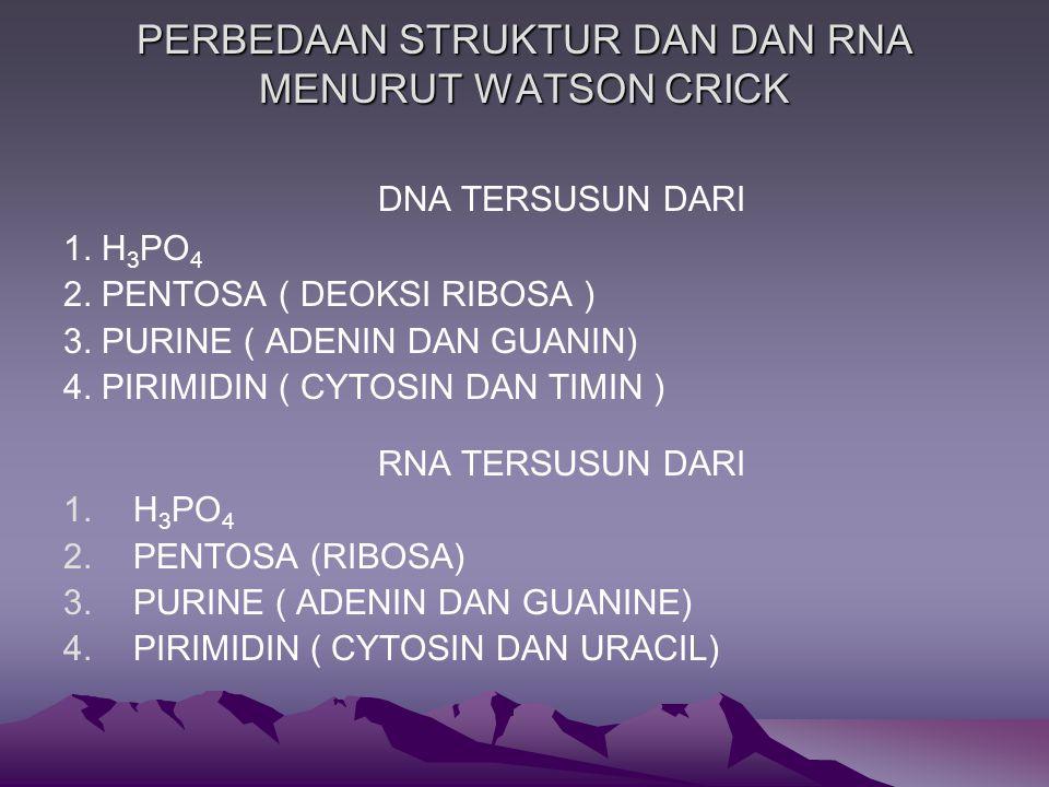 PERBEDAAN STRUKTUR DAN DAN RNA MENURUT WATSON CRICK