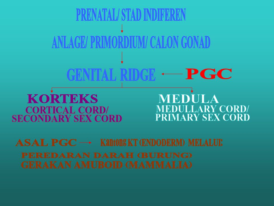 PRENATAL/ STAD INDIFEREN