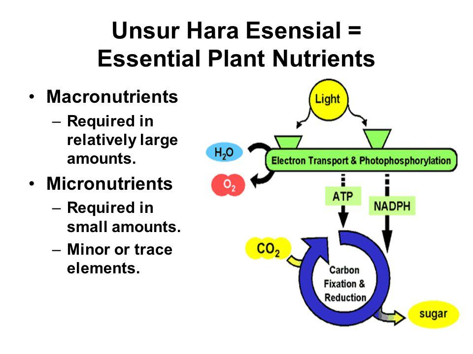 Unsur Hara Esensial = Essential Plant Nutrients