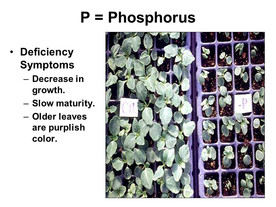 P = Phosphorus Deficiency Symptoms Decrease in growth. Slow maturity.
