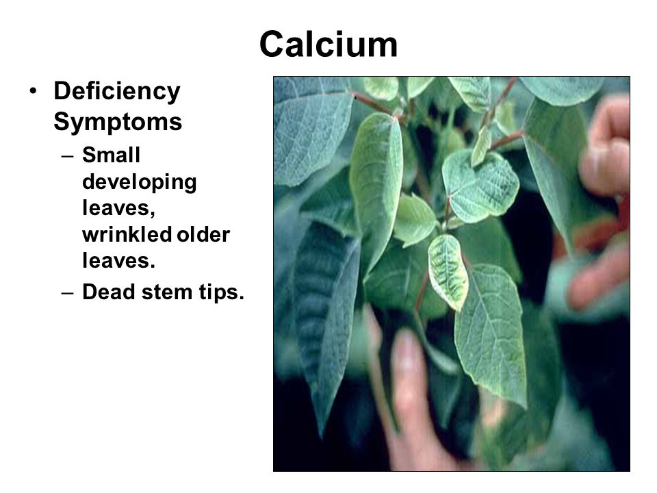 Calcium Deficiency Symptoms