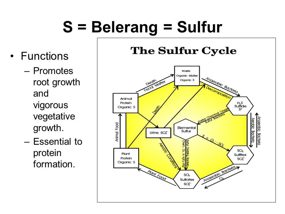 S = Belerang = Sulfur Functions