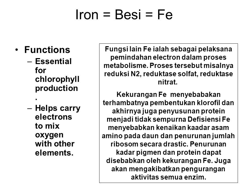 Iron = Besi = Fe Functions Essential for chlorophyll production.