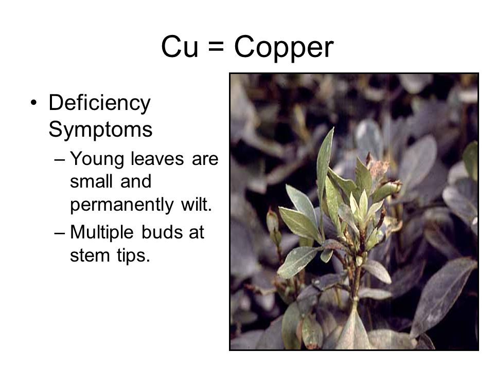 Cu = Copper Deficiency Symptoms