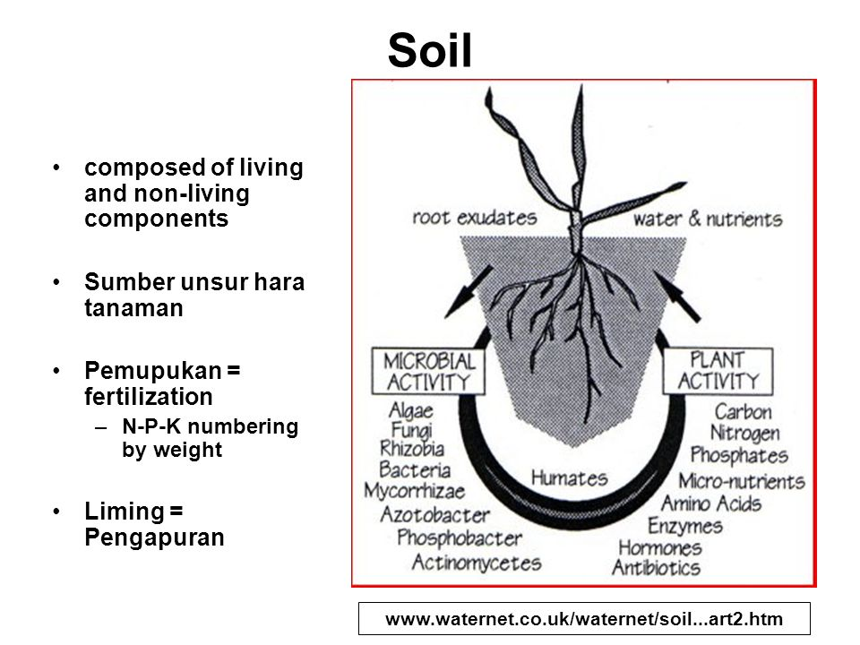 Soil composed of living and non-living components