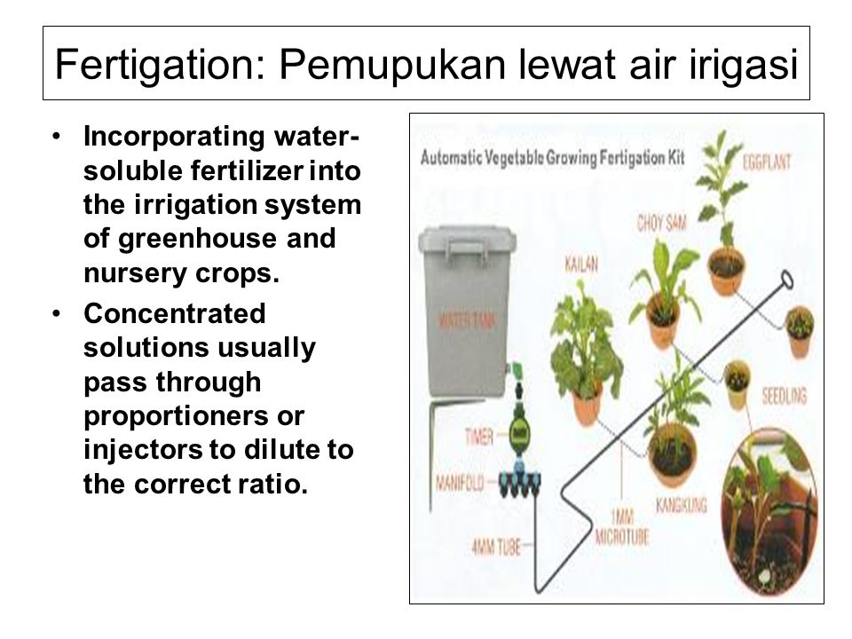 Fertigation: Pemupukan lewat air irigasi