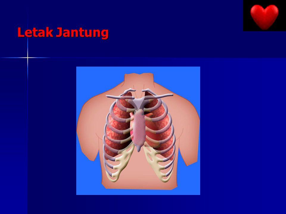 Letak Jantung