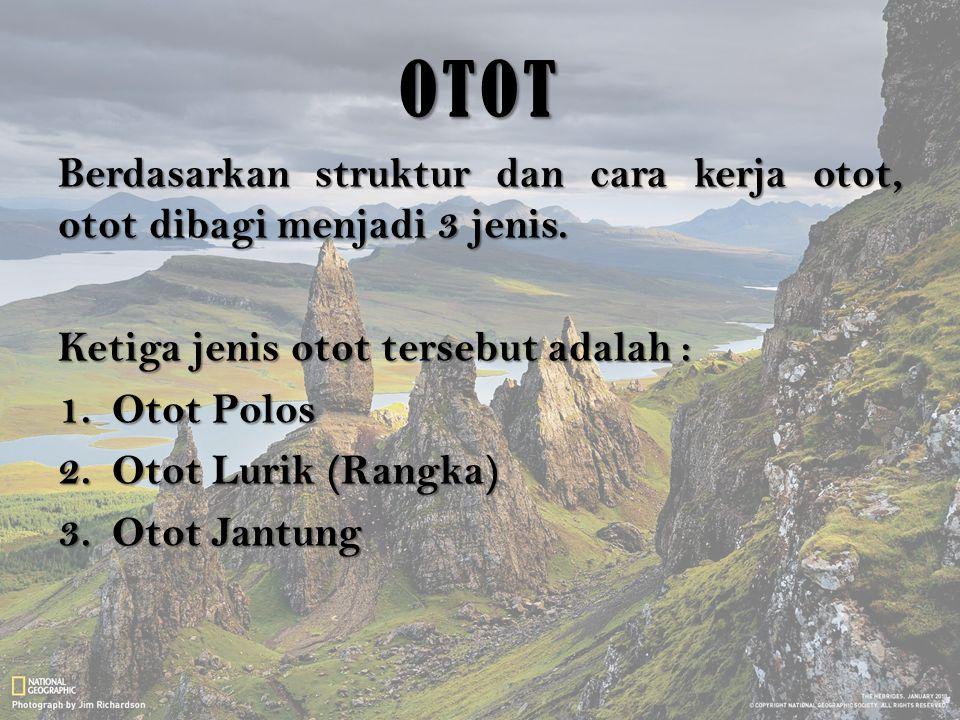 OTOT Berdasarkan struktur dan cara kerja otot, otot dibagi menjadi 3 jenis. Ketiga jenis otot tersebut adalah :