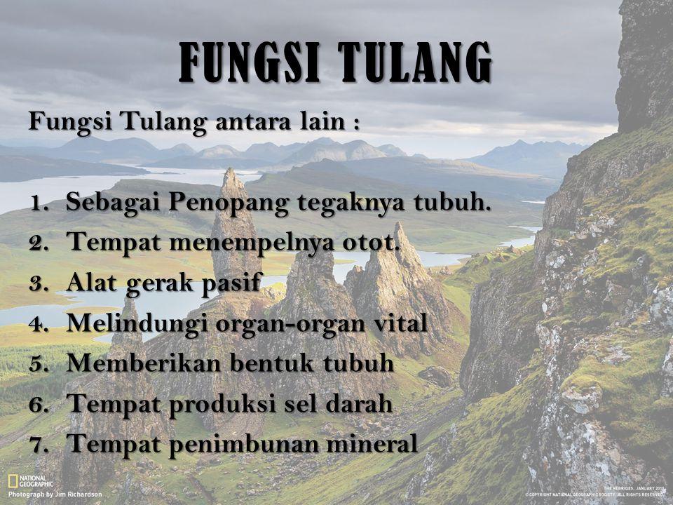 FUNGSI TULANG Fungsi Tulang antara lain :