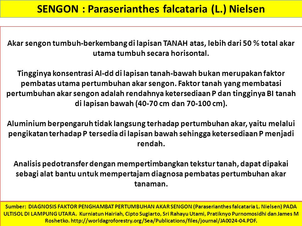 SENGON : Paraserianthes falcataria (L.) Nielsen