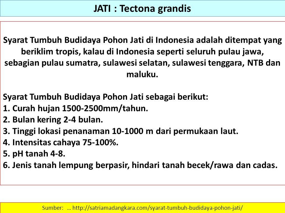 JATI : Tectona grandis