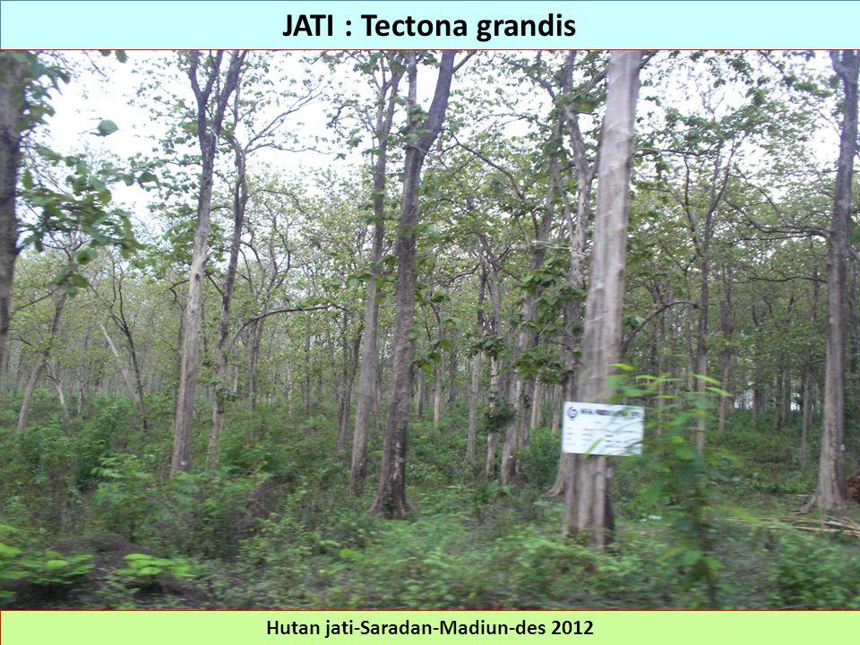 Hutan jati-Saradan-Madiun-des 2012