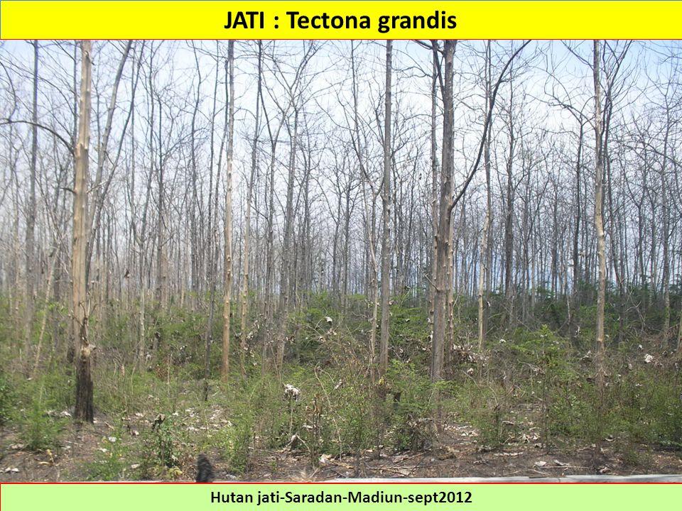 Hutan jati-Saradan-Madiun-sept2012