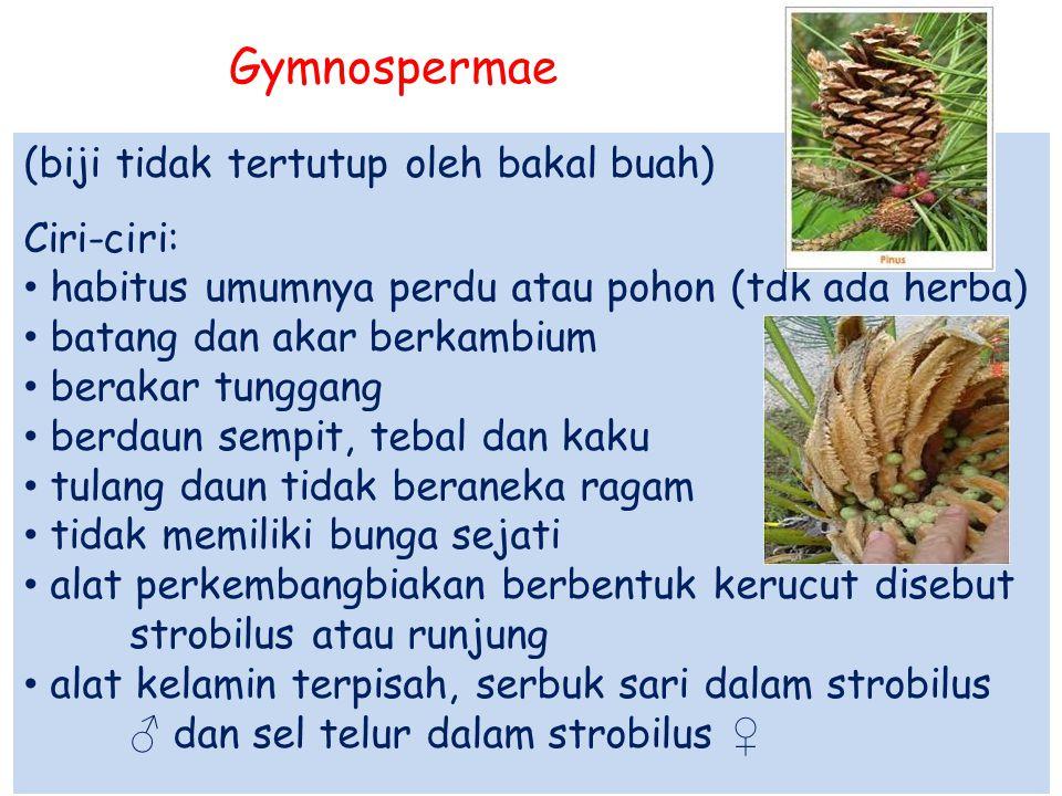 Gymnospermae (biji tidak tertutup oleh bakal buah) Ciri-ciri:
