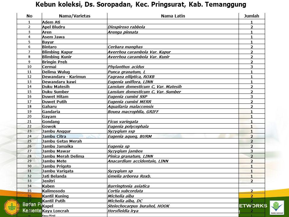 Kebun koleksi, Ds. Soropadan, Kec. Pringsurat, Kab. Temanggung