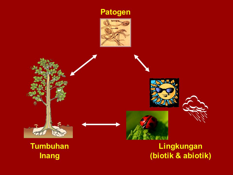 Patogen Tumbuhan Inang Lingkungan (biotik & abiotik)