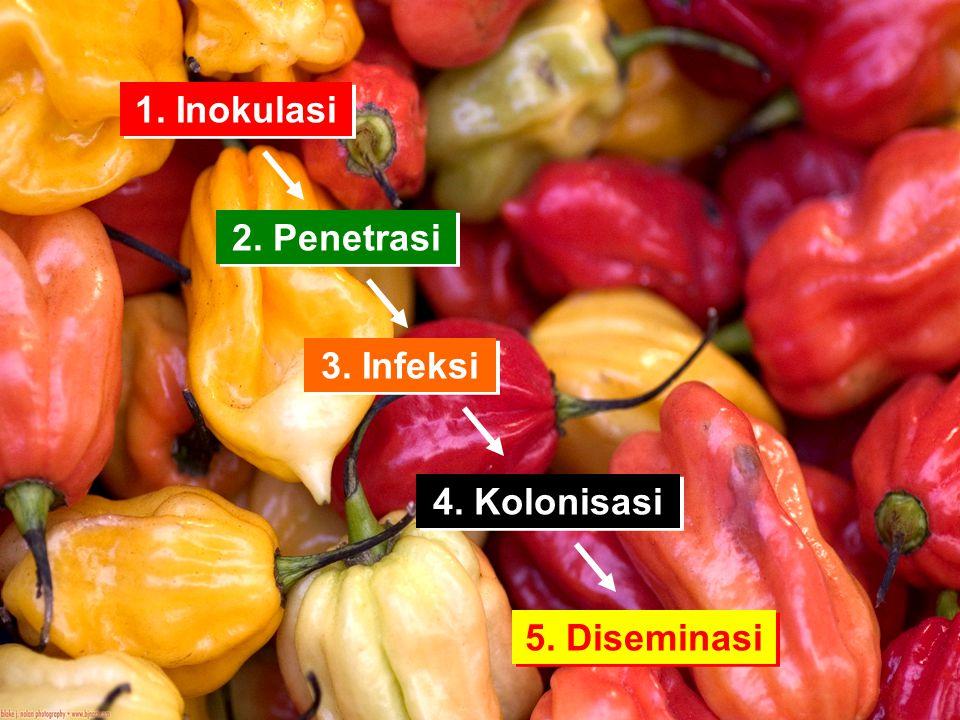 1. Inokulasi 2. Penetrasi 3. Infeksi 4. Kolonisasi 5. Diseminasi