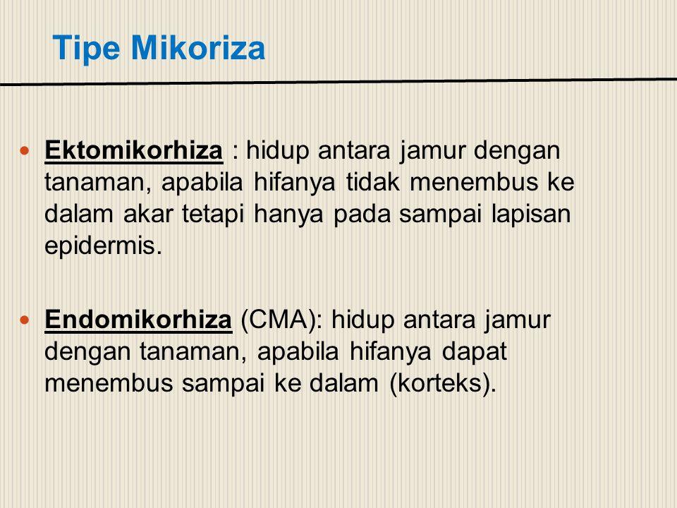 Tipe Mikoriza