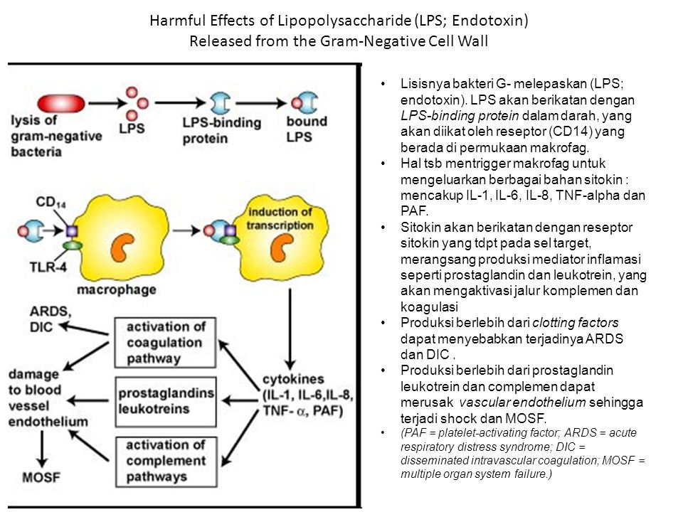 Harmful Effects of Lipopolysaccharide (LPS; Endotoxin) Released from the Gram-Negative Cell Wall