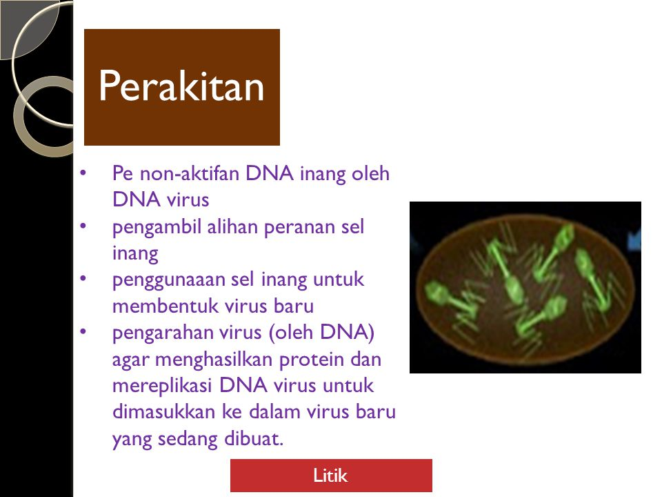 Perakitan Pe non-aktifan DNA inang oleh DNA virus
