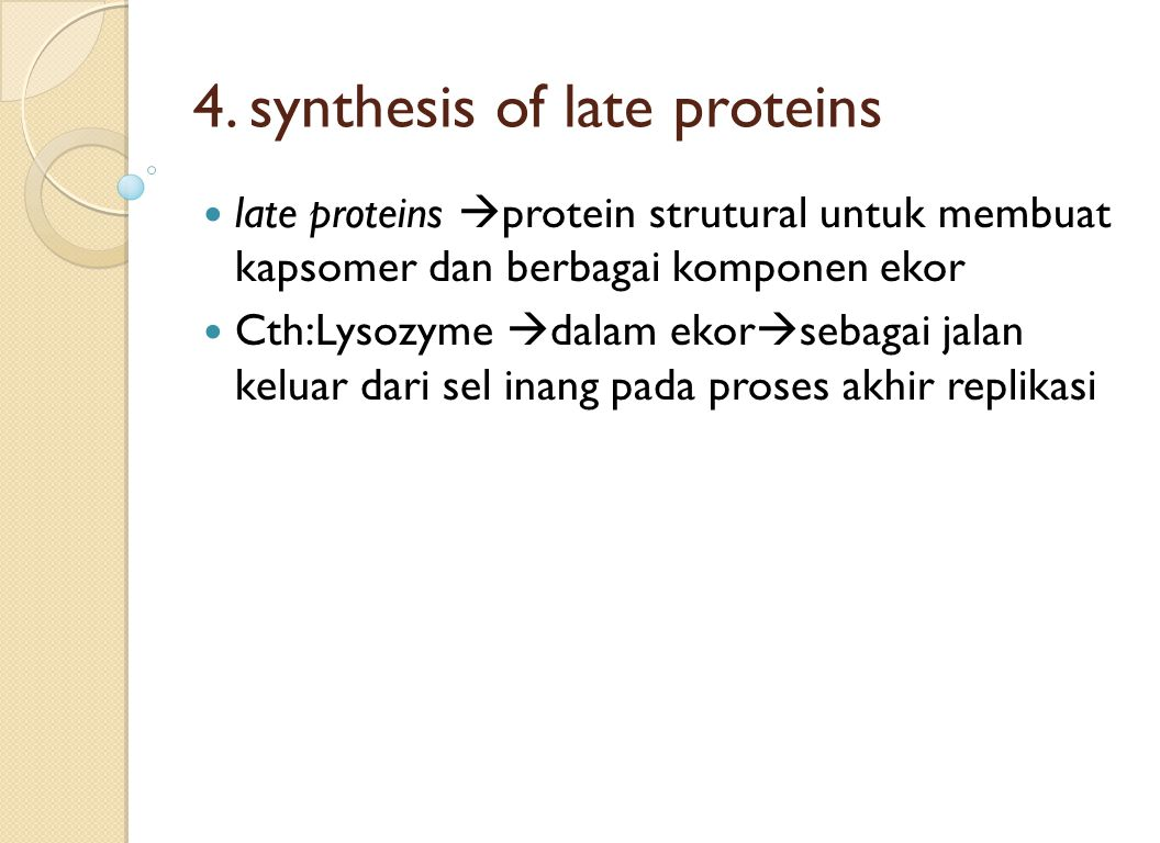 4. synthesis of late proteins