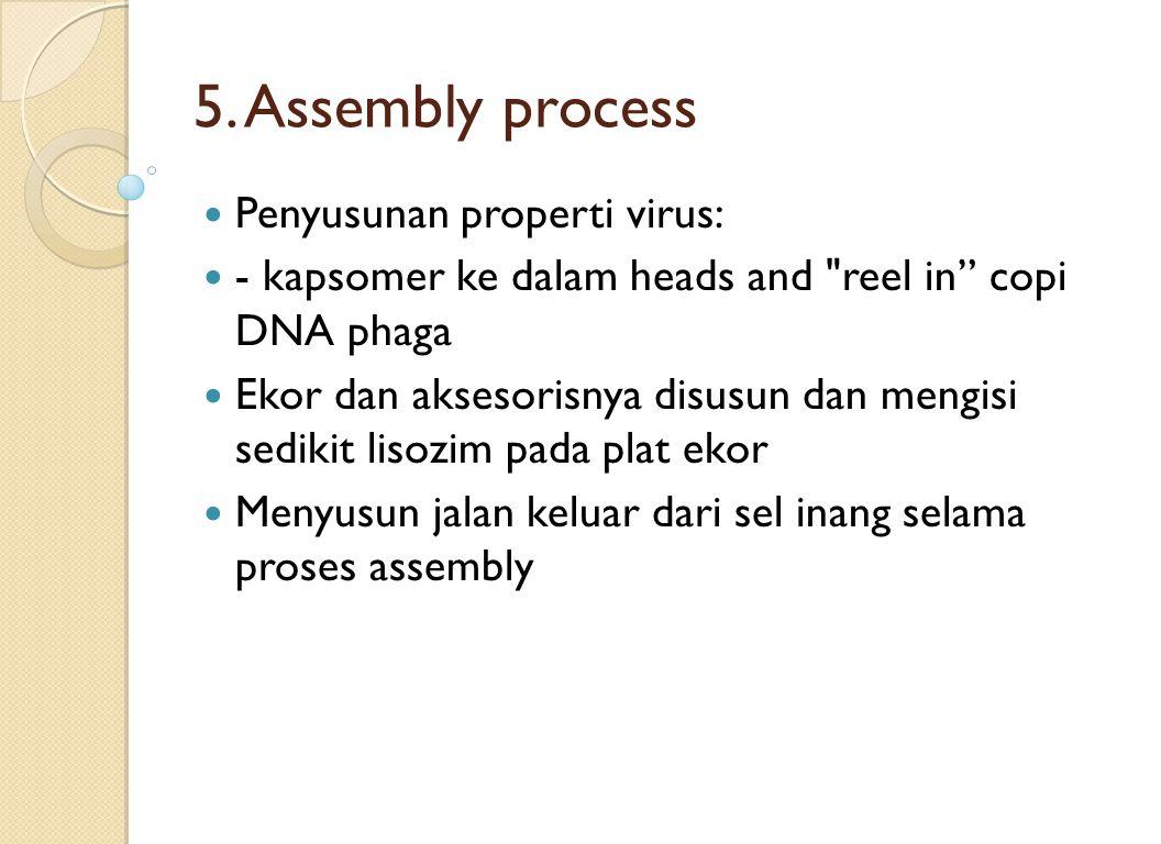 5. Assembly process Penyusunan properti virus:
