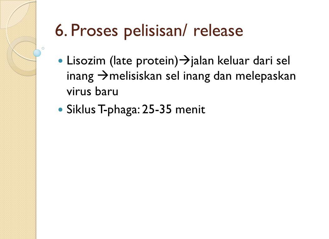 6. Proses pelisisan/ release