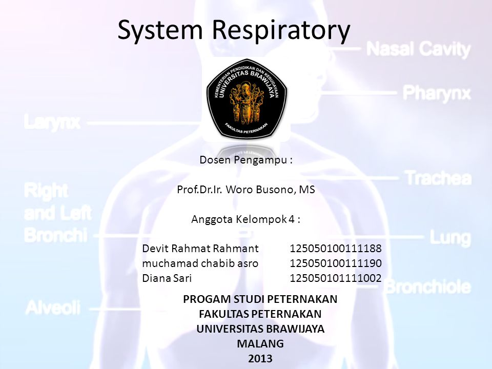 System Respiratory Dosen Pengampu : Prof.Dr.Ir. Woro Busono, MS