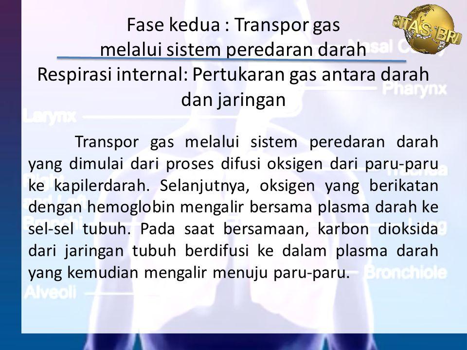 Fase kedua : Transpor gas melalui sistem peredaran darah Respirasi internal: Pertukaran gas antara darah dan jaringan