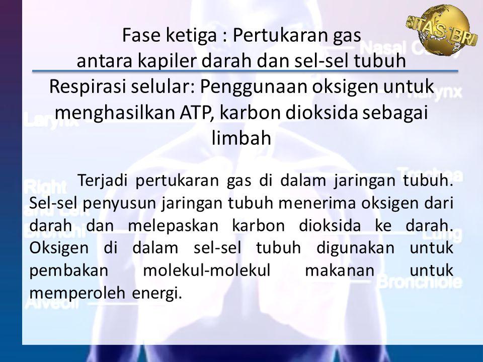Fase ketiga : Pertukaran gas antara kapiler darah dan sel-sel tubuh Respirasi selular: Penggunaan oksigen untuk menghasilkan ATP, karbon dioksida sebagai limbah