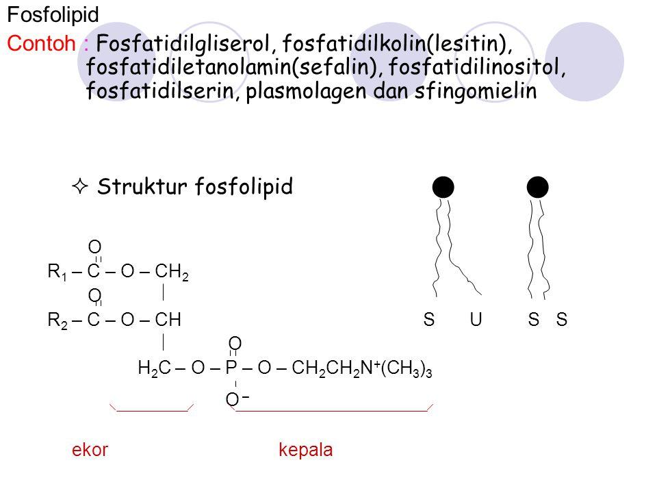  Struktur fosfolipid  