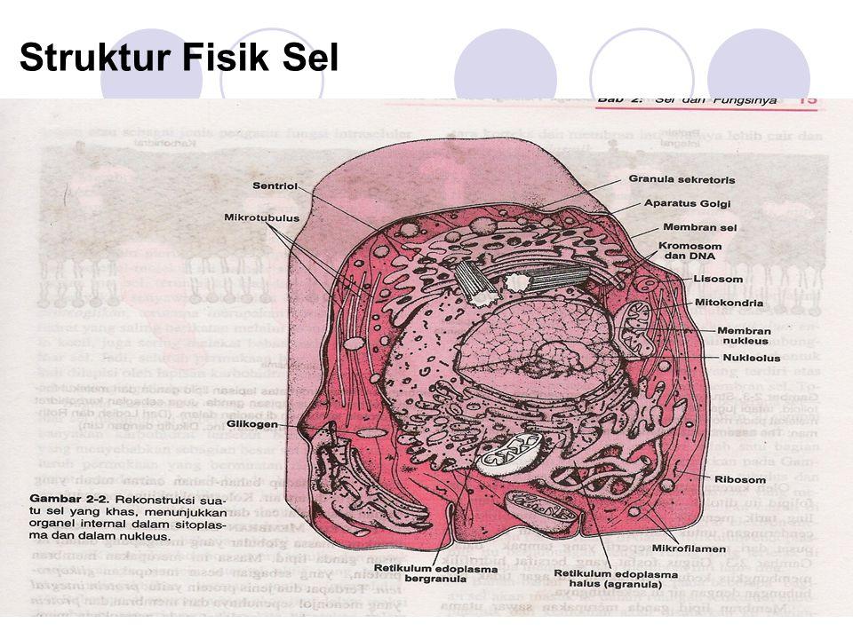 Struktur Fisik Sel