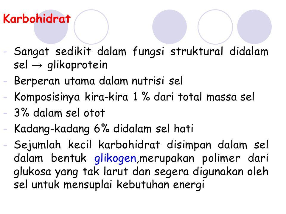 Karbohidrat Sangat sedikit dalam fungsi struktural didalam sel → glikoprotein. Berperan utama dalam nutrisi sel.