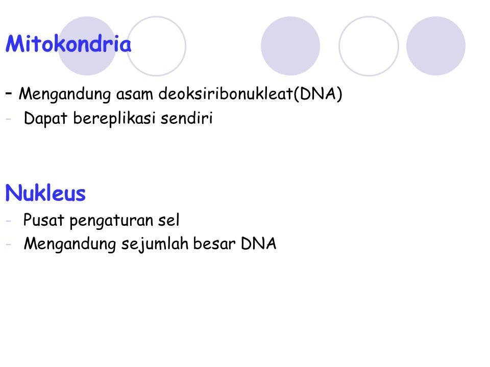 Mitokondria - Mengandung asam deoksiribonukleat(DNA) Nukleus
