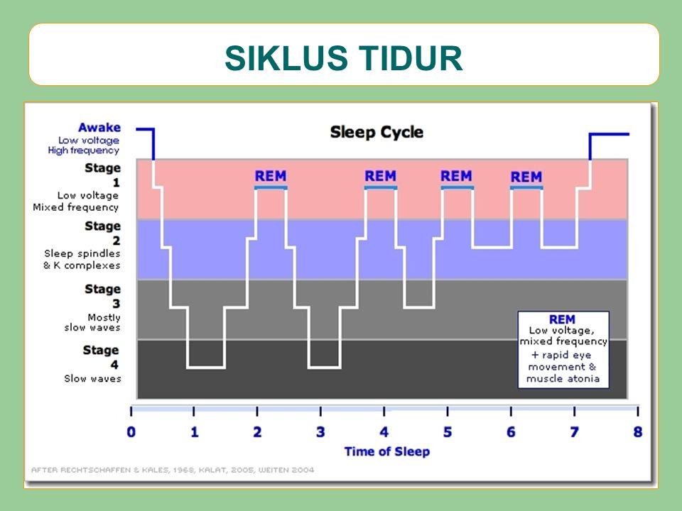 SIKLUS TIDUR
