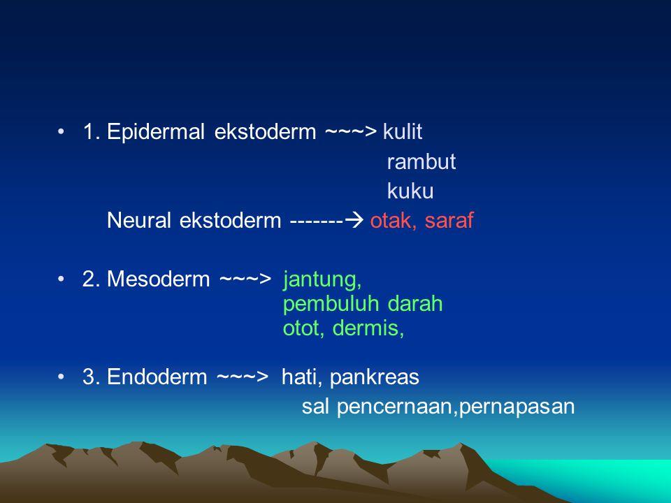 1. Epidermal ekstoderm ~~~> kulit